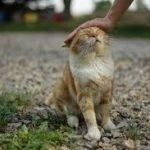 夢占いで猫を助ける?たくさん入ってくる、追い払うのは?飼う、なつく等